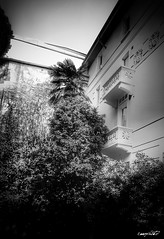 house (Massimo Vitellino) Tags: house outdoors structure architecture city abstract contrast conceptual perspective lights shadows hdr blackandwhite trees