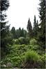 Hortus - Haren (Schnarp) Tags: hortusbotanicus hortus haren provinciegroningen natuur nature natur planten plants pflanzen garden garten nederland europa cameraraw raw pentaxk10d tuin tuinen laarmantuin rotstuin hondsrugtuin