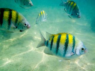 Mayan Riviera Marine Life