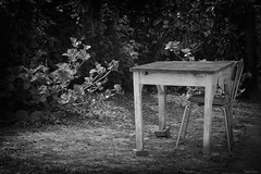 Solitude (martine_ferron) Tags: table chaise hortensia jardin noiretblanc