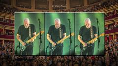 Dave Gilmour, (davenewby123) Tags: davegilmour david gilmour royal albert hall london rattle that lock tour 2016 davidgilmour rattlethatlock royalalberthall2016 davenewby concert music rock