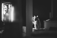 Vappu18-14 (junestarrr) Tags: vappu vappen firstofmay may spring finland eating withfriends visiting cat cornishrex