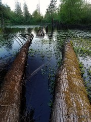 Dizzy logs. (thnewblack) Tags: lg v30 android smartphone outdoors nature britishcolumbia aicam f19 wideangle 13mp snapseed doubleexposure