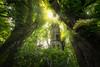 The Green Tower (@hipydeus) Tags: enchanted fairytale märchenplatz zauberwald mystisch rapunzel brothergrimm bayern nature wald