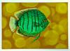 Green Discus (M.P.N.texan) Tags: fish tropicalfish freshwater discus greendiscus handpainted original mpn art painting