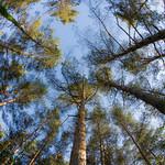 vertige d'arbres-9416-1-2018 thumbnail
