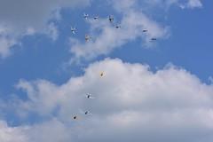 """Tora Tora Tora"" reenactment at La Ferté-Alais (Edwin van Keulen) Tags: airshow lafertealais lestempsdeshelices aviation airplane warbird helicopter t6texan t6 snjtexan snj letempsdeshelices"