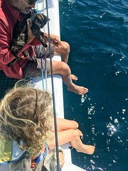 Captain M, his BoatCat and DB - watching the dolphins... (miaow) Tags: bellalunaboat abcmyphoto exploring australia pittwater liveaboard autumn2018 nsw boatcat