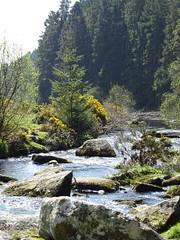 DSC07425 (guyfogwill) Tags: belever dartmoor dartmoornationalpark devon guyfogwill riverdart unitedkingdom dartmoorforest gbr