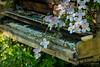 sound of nature (Thomas Haeusler) Tags: piano clematis nature ngc