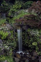 Hakone Gardens (Master KZ) Tags: waterfall nikond850 35mm japanesegarden hakonegardens saratoga