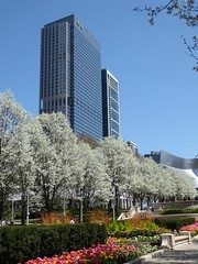 Chicago, Millennium Park, Flowering Trees and Tulips (Mary Warren 11.0+ Million Views) Tags: chicago urban architecture building skyscraper millenniumpark park nature flora blooms blossoms flowers tulips white trees peartrees