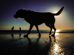 Dog over Brother and Sister (Maarten Baars) Tags: beach dog dogs child children brother sister sea panasonic1235mmf28 playing panasonicgx80 mirrorless microfourthirds micro43 color street streetphotography streetview streetlife streetphoto streetphotos streetstories water sunset sun pet pets