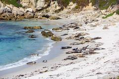 IMG_8420 (boguscoder) Tags: pacificgrove california unitedstates us
