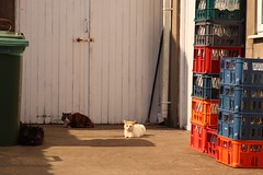 The Cats That Got The Cream (RoystonVasey) Tags: roaming email upload canon eos 77d sigma 1770mm zoom cat dairy milk bottle crate wheelie bin door