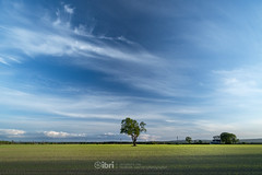 Cambus - 10 May 2018 - 12.jpg (ibriphotos) Tags: dogwalk summer warm sunset river benledi cambus wallacemonument riverforth onetree spring orchardfarm aroundtheforth clackmannanshire evening goldenhour sky sunsets