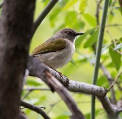 _DSC2387-editCC (Dave Krueper) Tags: africa southafrica birds birding bird