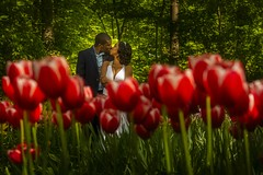 Lovers & Red Tulips (♥siebe ©) Tags: 2018 holland keukenhof lisse nederland netherlands siebebaardafotografie thenetherlands bloemen dutch familie family flowers fotoshoot photoshoot portrait portret tulips wwwsiebebaardafotografienl rood red kiss kus love lovers couple