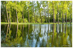 Reflets troubles (Pascale_seg) Tags: forest tree water étang river sky calm quiet green vert soir evening printemps spring moselle lorraine france nikon nature earth reflets reflection