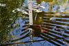 DSC_9383 (griecocathy) Tags: reflet eau harpie grillage fer poisson plante algues feuille ciel bleu bronze gris vert noir rouge jaune fleur