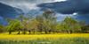 Trees (Ignacio Ferre) Tags: madrid alpedrete españa spain landscape panorama paisaje nikon tormenta storm amarillo yellow árbol tree atardecer naturaleza nature sierradeguadarrama
