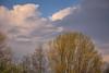 _DSC0019  - Spring skies (SWJuk) Tags: swjuk uk unitedkingdom gb britain england lancashire burnley home towpath leedsliverpoolcanal trees treeline sky skies bluesky clouds 2018 apr2018 spring nikon d7100 nikond7100 rawnef lightroomclassiccc