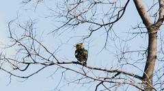 _DSC4932 (AngelPixCn) Tags: angepixcn birds farm feathers green hennopsriver nikond7100 pet southafrica tree wildlife wings centurion gauteng za