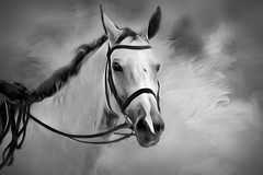White Lightening (Christina's World Off and On) Tags: artistic art animal california creative portrait digitalart dramatic digitalpainting exotic exoticimage horse horseback impressionistic light monochrome nature outdoors painterly painting equestrian sandiego textures unitedstates usa white blackandwhite black face