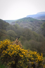 Welsh valleys (Justgetdancey) Tags: welsh wales valleys forest trees bush flowers beacons national landscape valley breconbeacons welshvalleys nationalpark breconbeaconsnationalpark