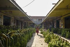 Triangle (Logesh Photostream) Tags: koyambedu market triangularcompostion banana women leading line cwc chennaiweekendclickers