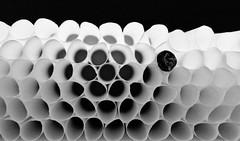 Cigarette tube (Charlotte P.Denoel) Tags: noiretblanc closeup detail nb bw white black noir blanc tobacco tabac cigarette tube ring cercle rond papier fragilité fragility léger légereté finesse