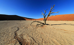 Deadvlei - Sossusvlei - Namibia (lotusblancphotography) Tags: africa afrique namibia namibie nature landscape paysage dune sand tree arbres