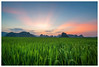 Rice Field (=Heo Ngốc=) Tags: rice flields green clouds mountains landscape national sunray sunset sunrise d700 nobody blur culture vietnam