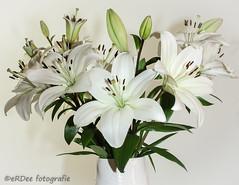 Lilies (Ronald Dubbeldam) Tags: lilies lelies flowers bloemen
