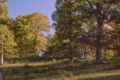 In The Woods (Modkuse) Tags: kodachrome kodachromeii kodakslide slide transparency canon canonae1 50mmf18 50mmf18canonfd nature landscape woods