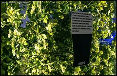 Guinness Museum - Dublin (Ireland) (Dorron) Tags: urko dorronsoro sagasti dorron nikon d3s donostia san sebastian gipuzkoa guipuzcoa euskal herria euskadi basque country pais vasco irlanda ireland dublin guinness museum museo museoa hops