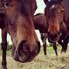 Guten Morgen am Brückentag (Antje_Neufing) Tags: pferd gesicht tier natur augen