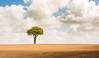 the lone tree lancashire (markmcneill22) Tags: lancashire landscape nikon lone tree feilds clouds farm wyre