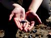Hands (livsillusjoner) Tags: outdoor outside hand hands shell shells fjera fjere shoreline girl girls child children kid kids beach colour colours colors