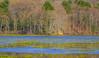 Spring At The Nature Blind (John Kocijanski) Tags: landscape bashakill water wetlands nature building canon70300mmllens canon7d sullivancounty
