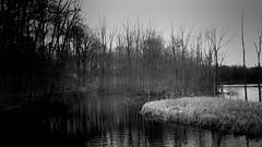 The Pond 4 (Jeffery Womack) Tags: mayburystatepark 2018earylyspring nature water blackwater hikingtrails michigan pond trees reeds smartphonephotography blackandwhite novi samsunggalaxy8plus lake monochrome dramaticmonochrome northville unitedstates us