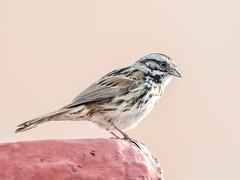 Pájaro (ruimc77) Tags: nikon d810 nikkor afs 200500mm f56e ed vr bird pájaro pajaro passaro pássaro animal fauna avian wild life vida selvaje selvagem