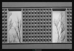 Windows of Autumn (Ilan Shacham) Tags: tokyo japan city urban cityscape fineart fineartphotography tree window reflection graphic abstract minimalism bare bw blackandwhite