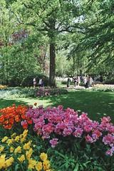 Keukenhof (lluunnoo) Tags: spring colour tulips garden park flowers lisse keukenhof