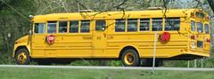 Freeman Bus Corp. #15 (ThoseGuys119) Tags: freemanbuscorp schoolbus watertownny thomasbuilt freightliner fs65 c2 saftliner yellowbumpers