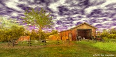 a quiet day at the farm (mrjulessixpence(bloggers do not follow me,unless y) Tags: animal farm cow horse apple hay flowers green purple