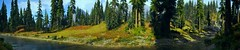 """The colorful nature."" (The Wasteland Survivor) Tags: screenshot panorama nature colorful grass tree flower wood forest landscape hope county far cry 5"