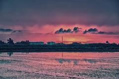 Rice Rising (lenwilliamson) Tags: reflection pegomarshes water sunrise