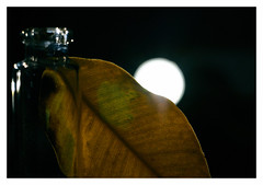 Another dead leaf (GlebLv) Tags: a6000 sony macro deadleaf leaf stilllife contour light lowkey backlight sel50f18 inexplore
