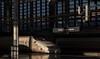 """madrid_puerta_atocha_0011 (byJMdF) Tags: roja canon eos 5d aficionado amateur iluminación natural documental post procesado lightroom color ferrocarril tren railway train station estación madrid atocha ave mecánica mechanical alta velocidad high speed arquitectura architecture """"eos mark ii"""" tragaluz atrio ventana"""